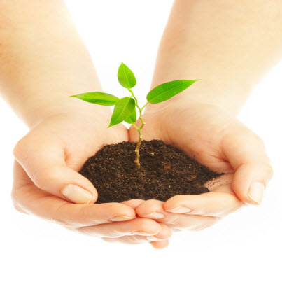 How is Sustainable Development Beneficial to Organizations?