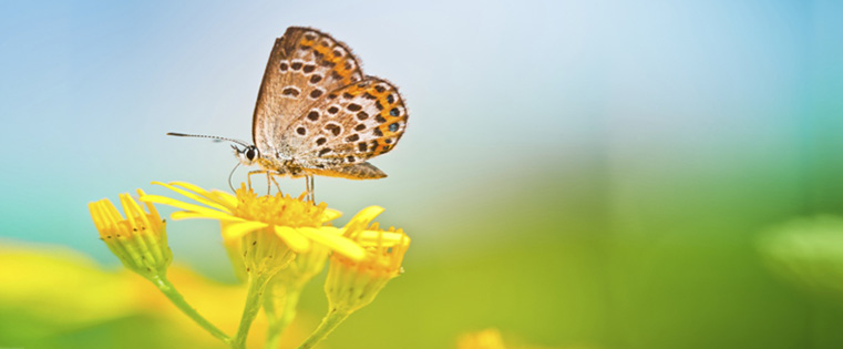 The Butterfly Effect: What is it and How is it Related to Corporate Training