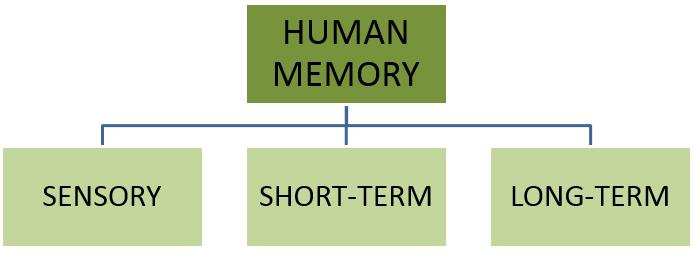 3 Levels of Human Memory